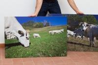 16_pannello-sandwich-70x100-cm-per-agriturismo-cascina-bianca---photo-by-marco-destefanis.jpg